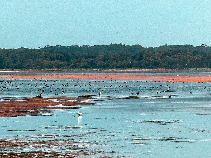 Photograph of Birdlife on Lake Wollumboola, Culburra Beach, Shoalhaven, south coast NSW, Australia
